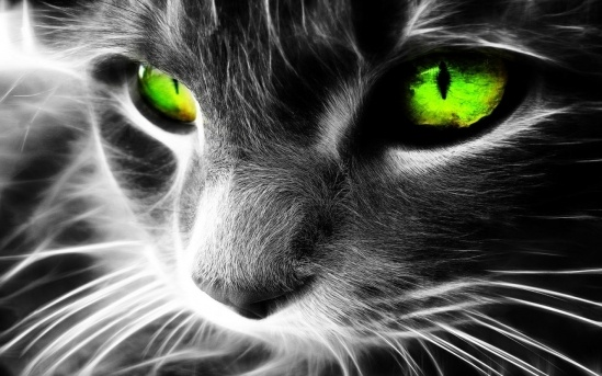 b_cat-with-green-eyes