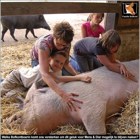 Promised-Land-of-Pigs2